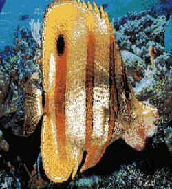 H-DMA Fish Demo (PD) ROM