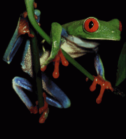 Test - Frog Picture (PD) ROM